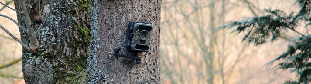 Wildkamera: Kamera verstecken