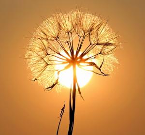Solar Überwachungskamera Sonne