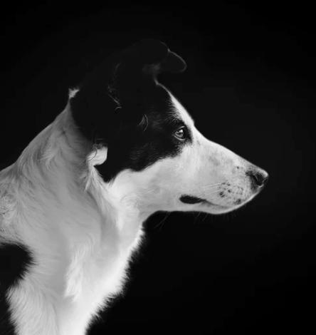 Elektronischer Wachhund