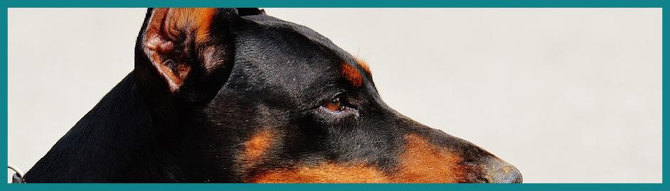 Alarmanlage nachrüsten: Hund